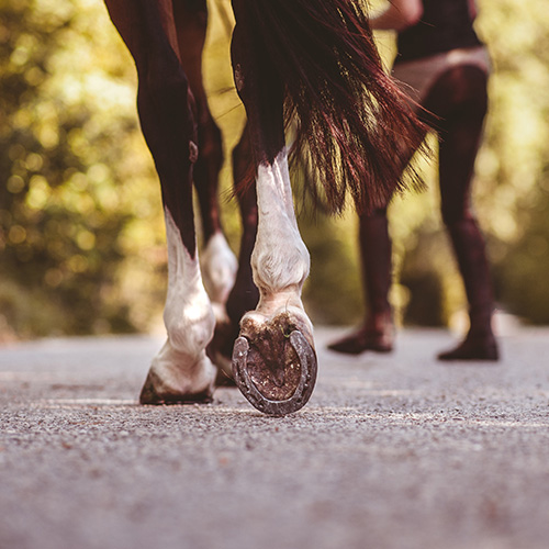 Horse being walked