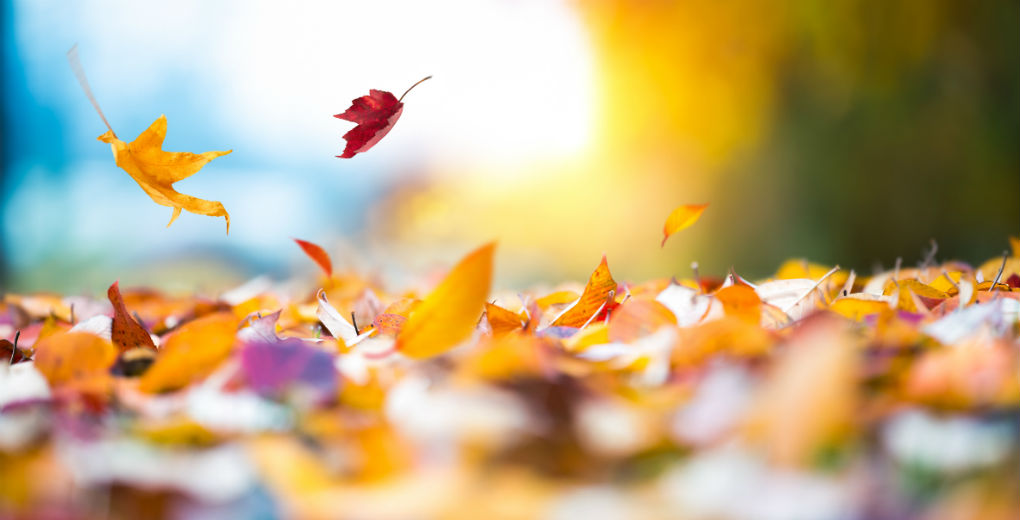 Fallen leaves on the ground to reflect insurance advice in Northumberland and Newcastle